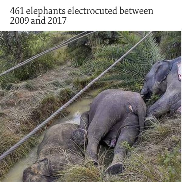 The-Hindu-Elephants-Electrocuted